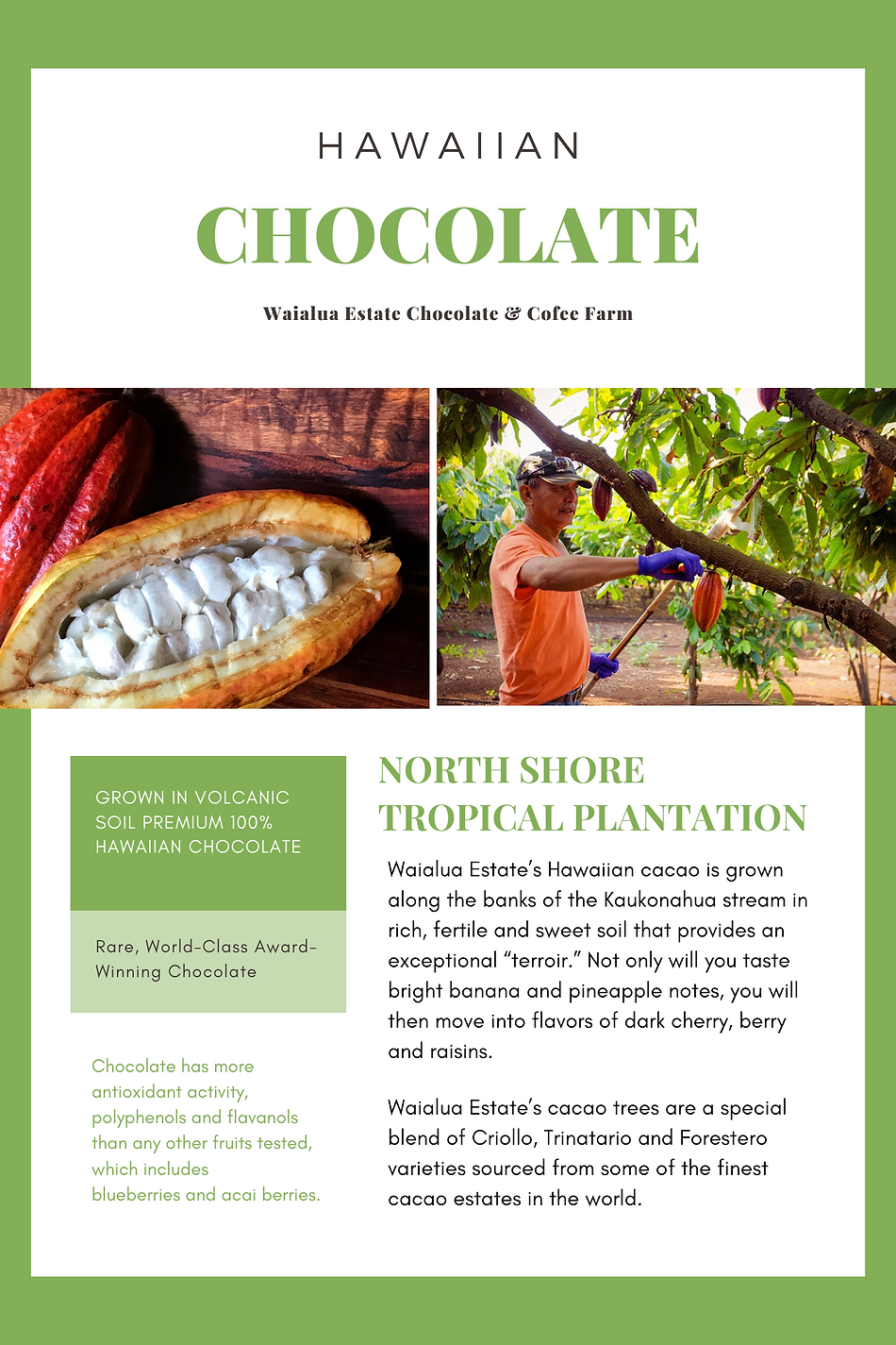 green and orange healthy food newsletter