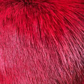 Antelope Red