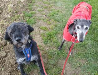Frankie & Molly