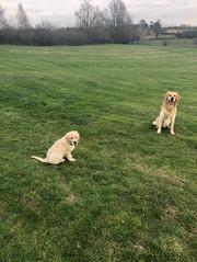 Hector & Humphrey