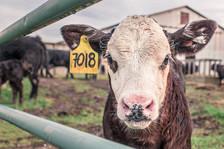 UUP unveils manifesto priorities for farming