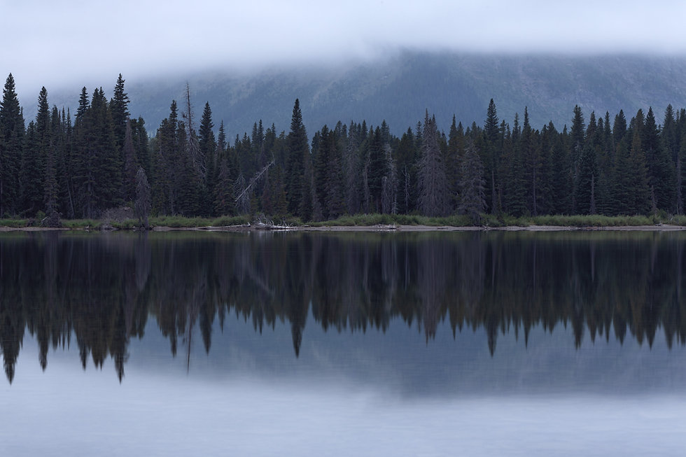 Pine trees along a lake shore in Glacier National Park