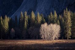 Yosemite - Hiraeth (1 of 1).jpg