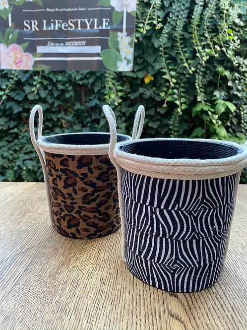 Animal Print Pot & Succulent