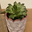 Thumbnail: Arc Round Planter with succulent