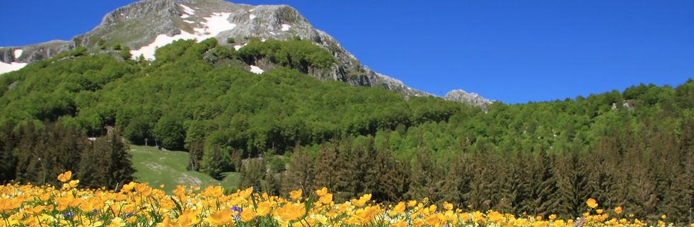 foto fiori San Nicola_edited.jpg