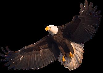 eagle_PNG1236_edited.png