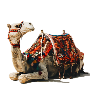 —Pngtree—egypt camel_3987953.png