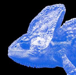 Iguana-Face-PNG-Image2.png