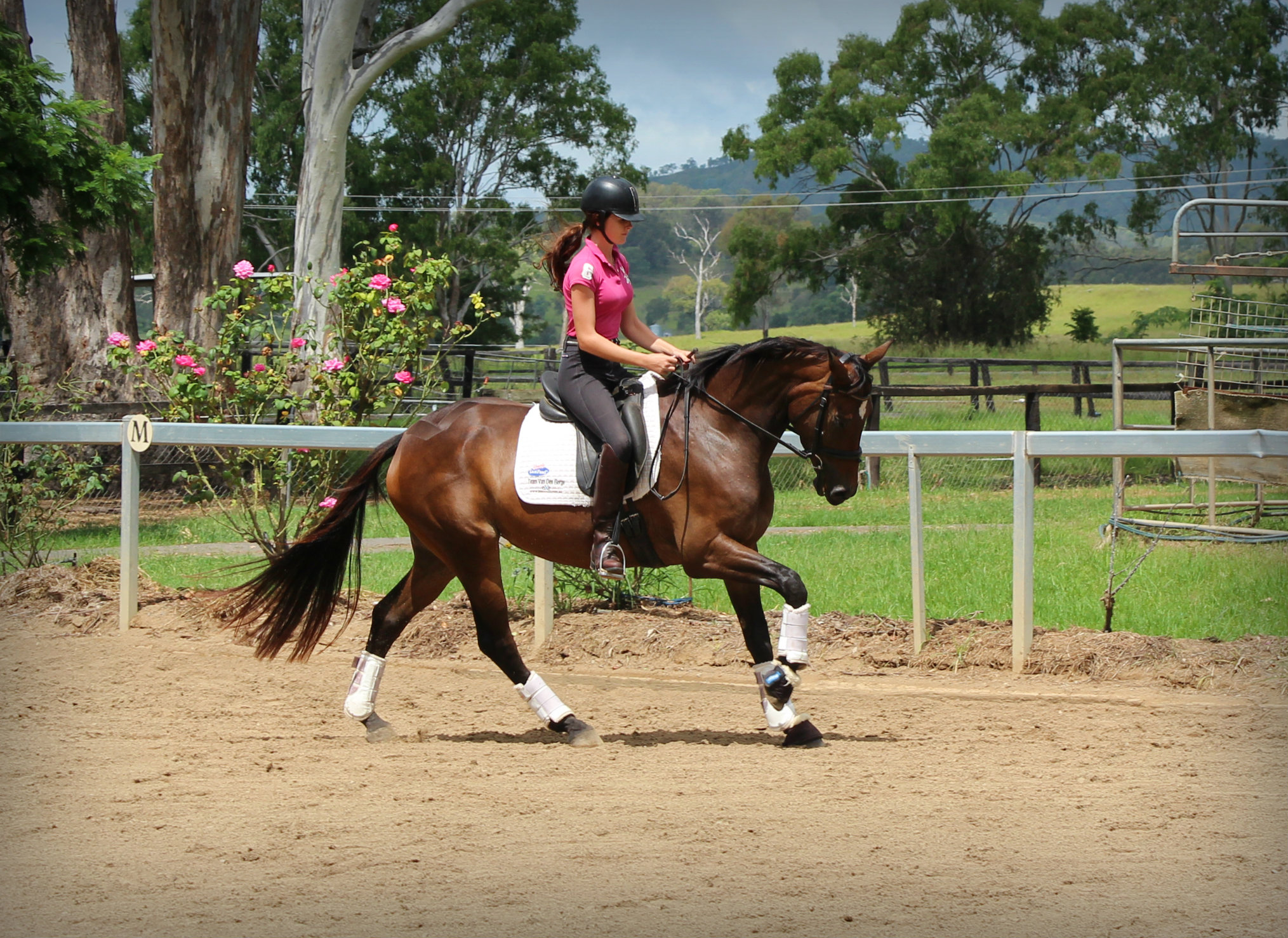 Team Van Den Berge|HORSES FOR SALE