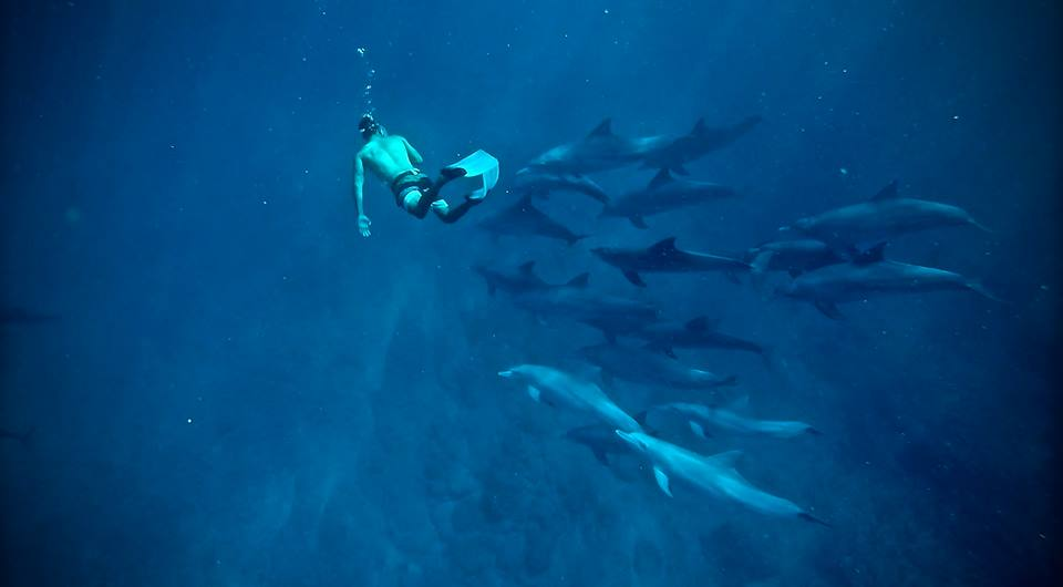 Diving with dolphins/Mauritius