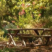 Buttonwood picnic table.jpg