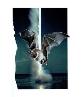 Bat Strike