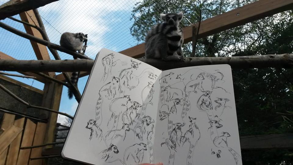 sifaka zoo 2.jpg