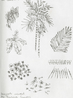 Branwen_Bindra_SriLanka_Drawing.jpeg
