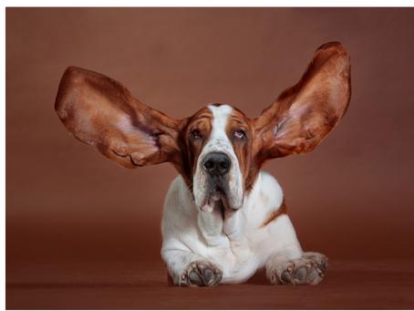 Handling Your Dog's Hearing Loss