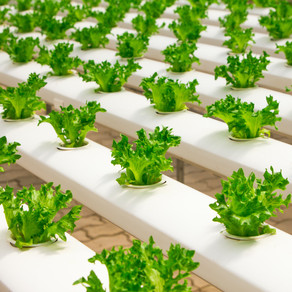The food industry and 10 inspiring organizations