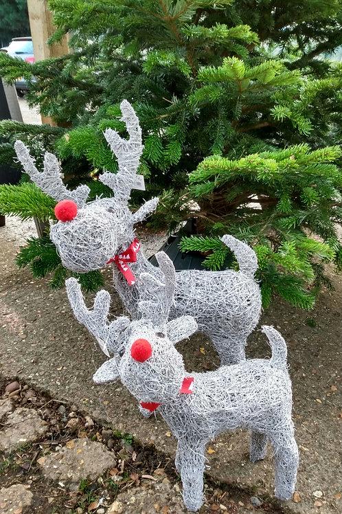 Reindeer. From: