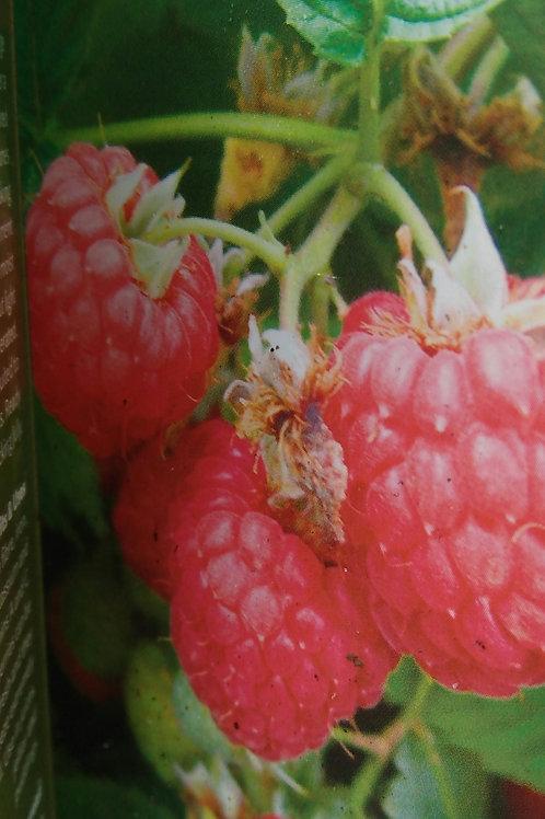 Raspberry Octavia