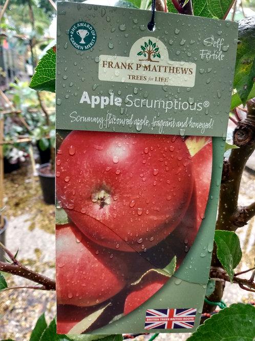 Apple (Malus) 'Scrumptious'