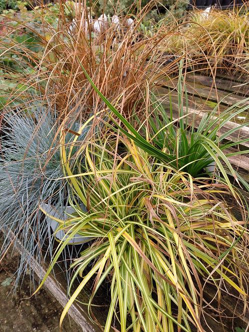 Grass evergreen mix x 4 LOW