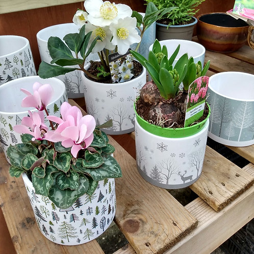 Christmas pots. From: