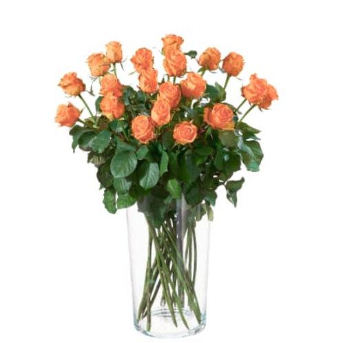 Orange Rosen (Anzahl wählbar)