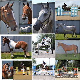 Excellent Horses and Ponies for Sale