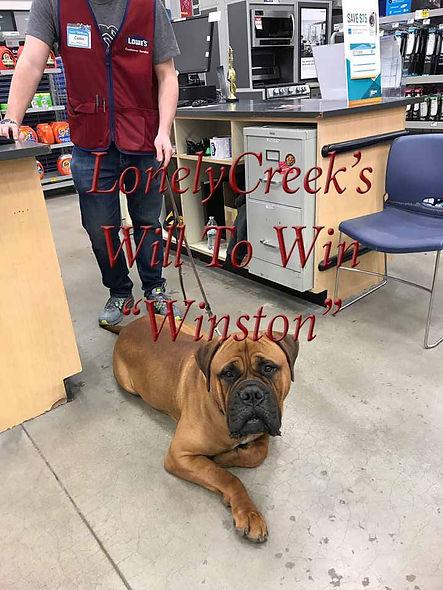 WinstonatLowesFay2-19.jpg