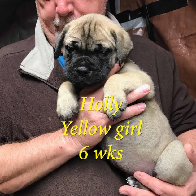 YellowGirl6wks.jpg