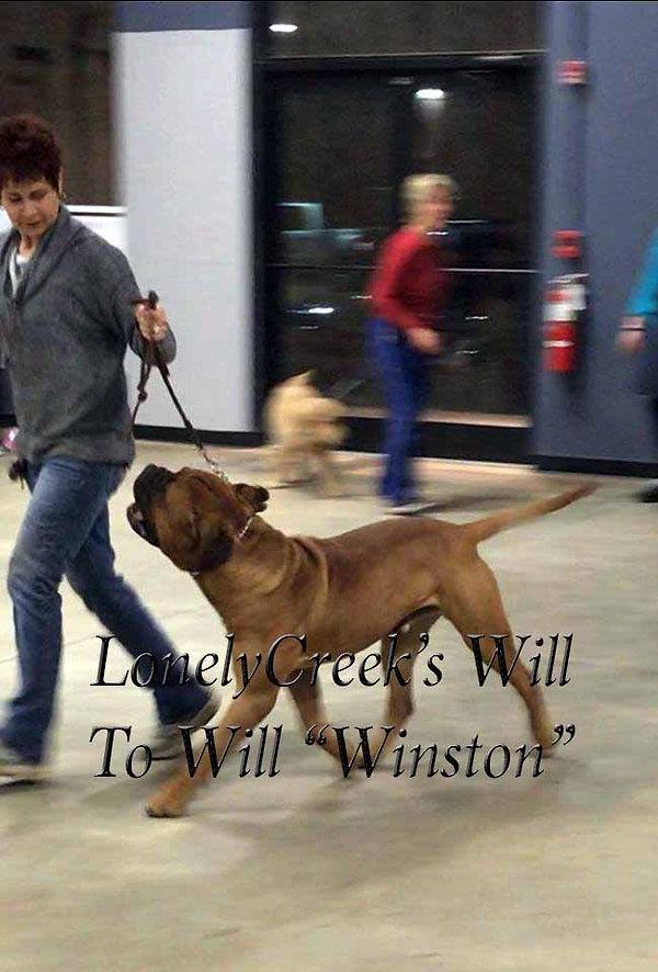 WinstonsideviewTraining2-19.jpg