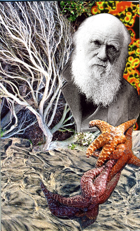 17 Darwin community.jpg