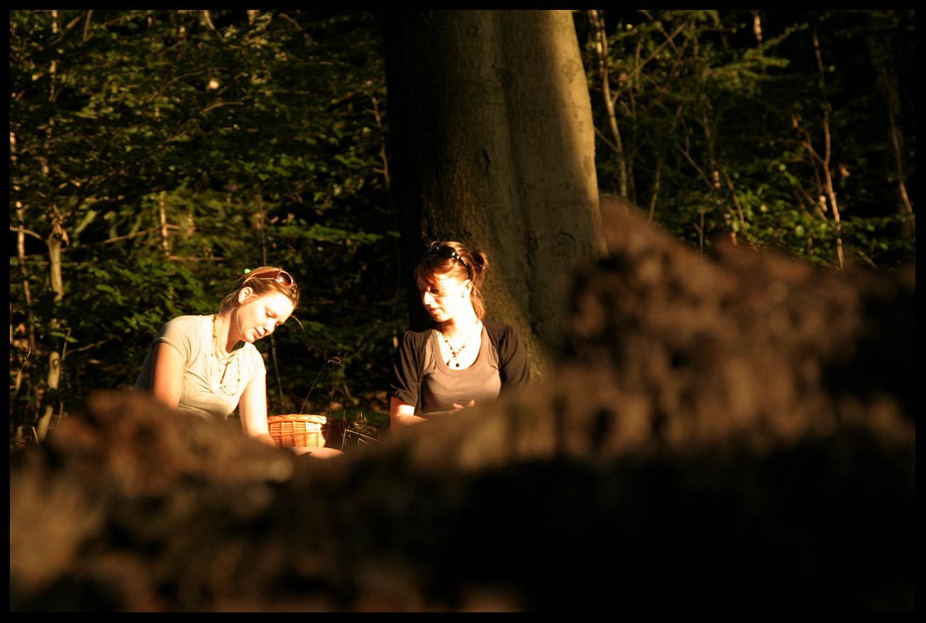 picknick sonsbeek park