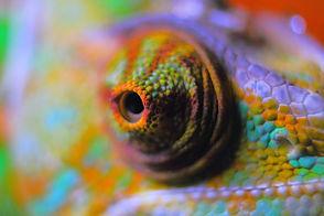 chameleon-abstract-378557_1920.jpeg