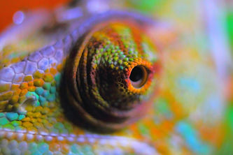 chameleon-abstract-378557_1920_edited.jp