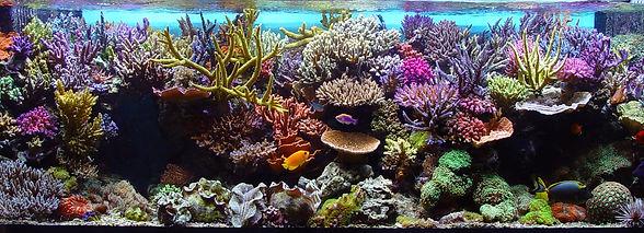 coral%20aquarium_edited.jpg