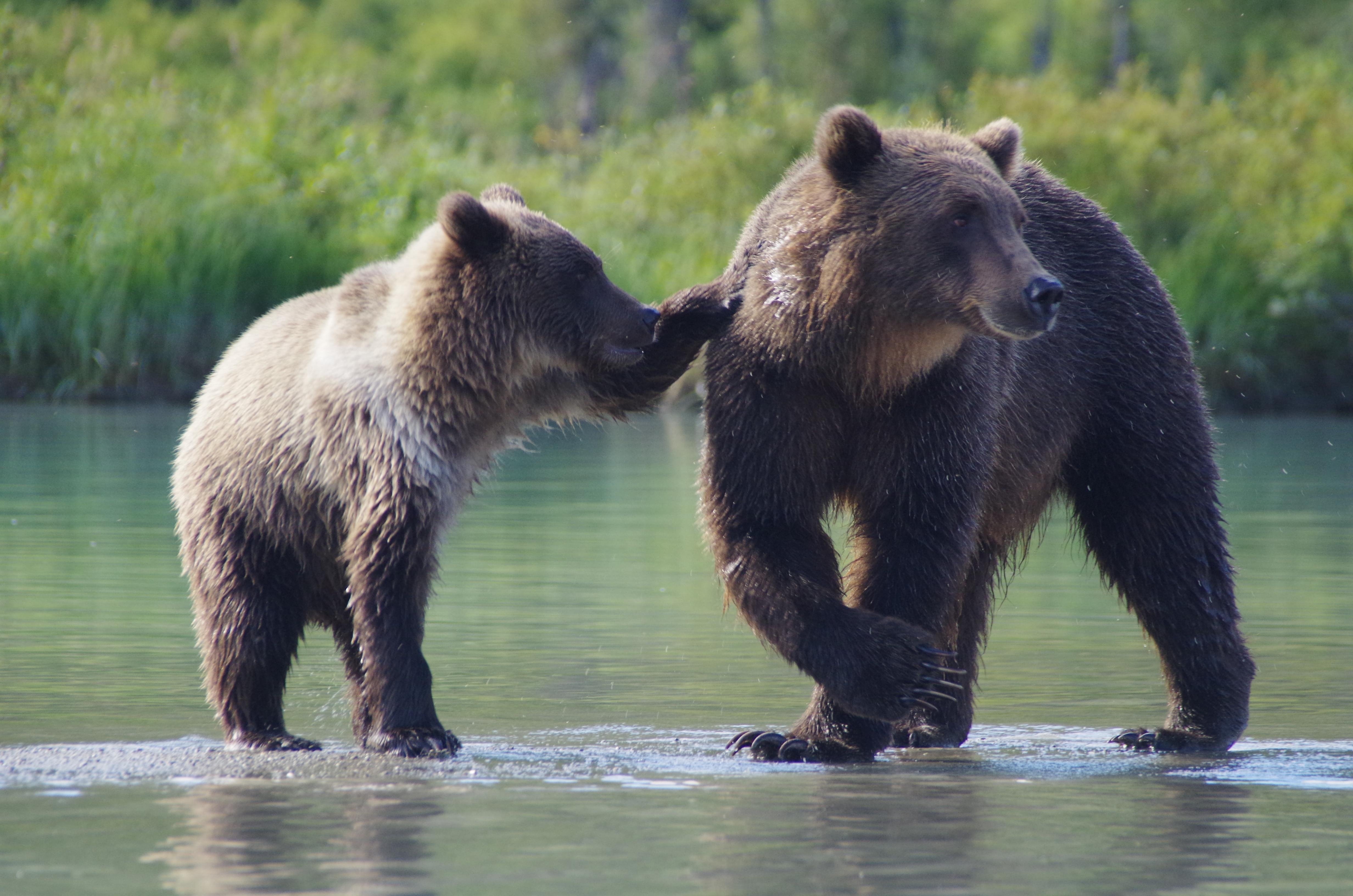 good-bear