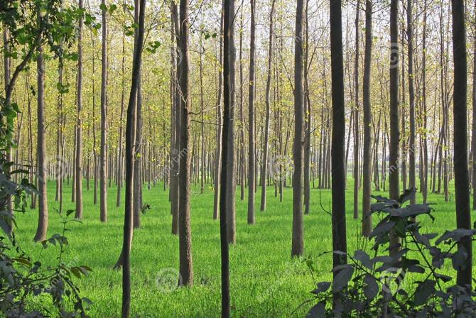 """""""Picaseseadas"""" que importan: Cultivos sustentables."""