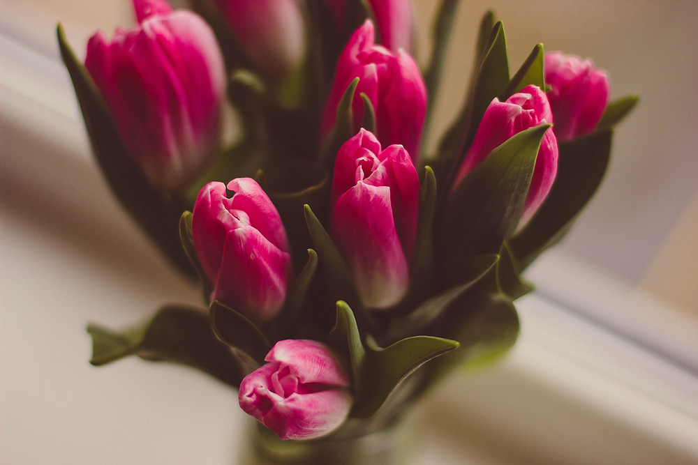 Bouquet of tulips represent forgiveness