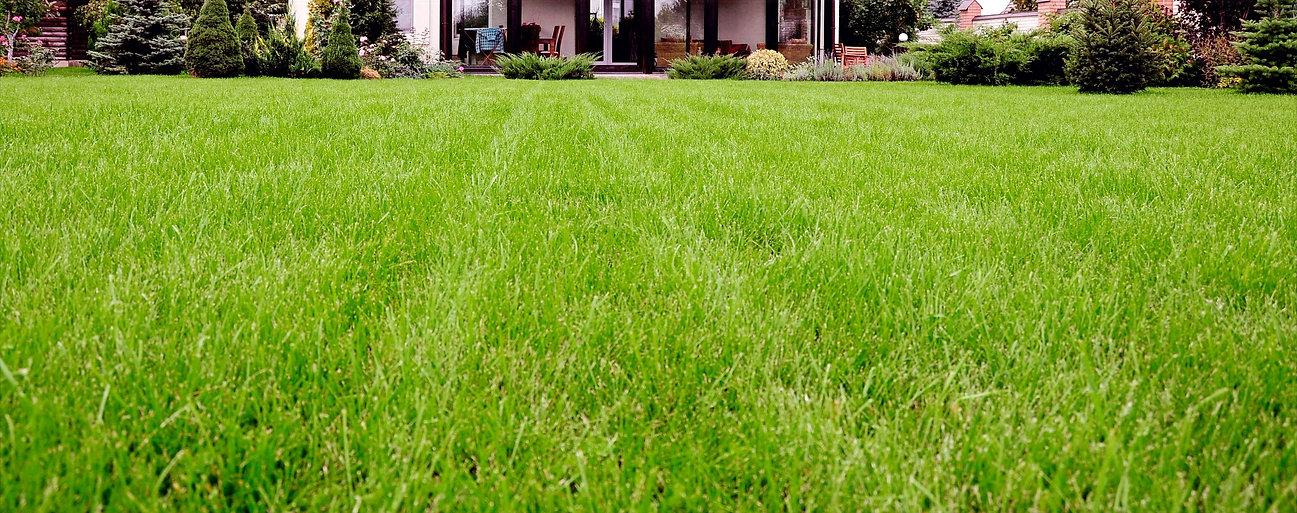 Lawn%20Strip_edited.jpg