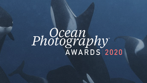 Ocean Photographer of the Year 2020 ecco i vincitori per categoria