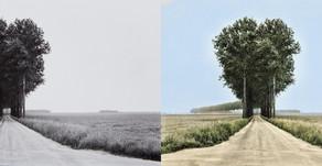 Dal Bianco e nero al Colore: una applicazione web gratuita converte le immagini in bianco e nero usa