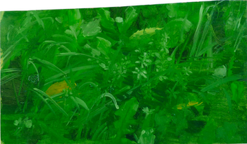 Herbes, 25x35cm, oil on wood, 2014 _ private collection