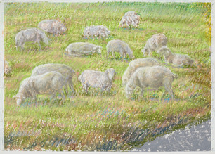 Moutons_oil pastel on paper_2020