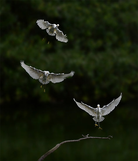 Vertical Landing
