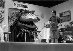mushnik_04