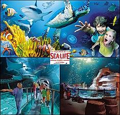 sea life 6.jpg