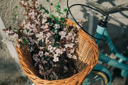 basket-2598967_1280.jpg