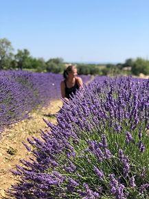 Lavande_Ardèche.jpg