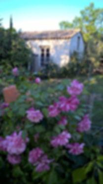 Photo de rose dans un jardin avec l'atelier de création, le lieu d'Anany